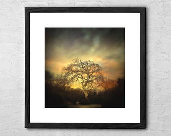 Un Dernier Crépuscule - Fine Art Photography - Tree Poster - Horror Art - Nature Art Print - Gothic Wall Art - Tree Wall Art - Tree Print