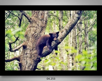 04.253 Black Bear Cub Limited Edition, Signed and Numbered 11x14 Matted Images (black mat)