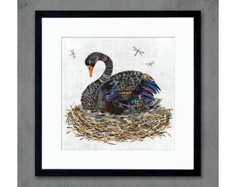 Black Swan in Nest Art Print