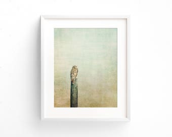 """owl photograph, nature photography, large art, large wall art, wall art prints, fine art prints, large art prints, rustic - """"Owl See You"""""""