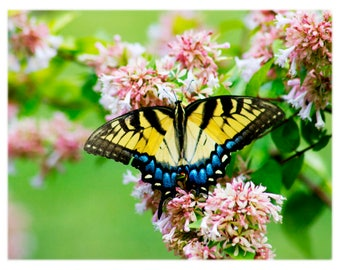 Swallowtail Butterfly on Pink Flowers - Nature Photography, North Carolina - Home Decor Fine Art Print or Note Card Set