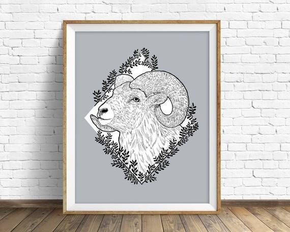 Rocky Mountain Bighorn - art print