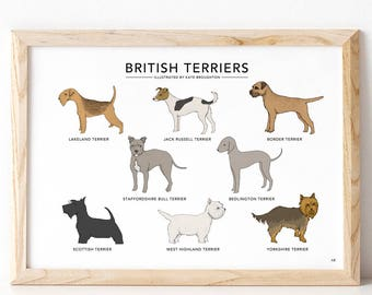 British Terriers print - dog breed illustration poster - border , yorkshire , lakeland , jack russell , scottie , bedlington