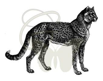 Digital Cheetah Download Old Transfer Artwork Crafting Illustration Printable Clip Art