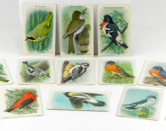Small Lithographed Bird Prints Useful Birds of America 9th Series Partial Set of 13 2 x 3 Inches Artist Louis Agassiz Fuertes Antique Paper