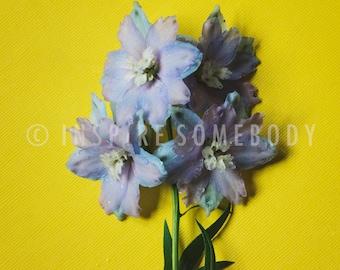 SUNSHINE 8x12 Rain Drop Purple Delicate Micro Flower Fine Art Print
