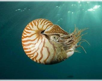 Fossil Nautilus Shell Pendant