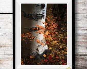 Aspen tree art, Colorado art, rustic cabin decor, Fall photo, Red Rust Orange Gold, log home decor, livingroom landscape, aspen photo