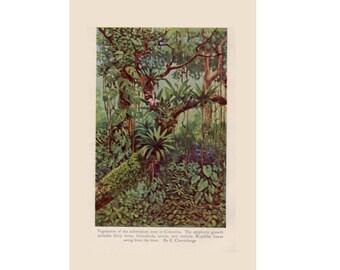 c. 1934  SUBTROPICAL FOREST PRINT - vintage botanical print - plant print - old  print - vintage lithograph of flora - orchids ferns trees
