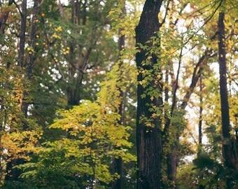 Autumn Forest - Fine Art Photograph, Fall, Nature Photography, Wall Art