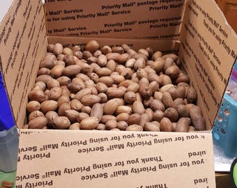 10 lbs PECANS (IN SHELL),mostly paper shells, 2016 large to medium. Birds,People organic, no pesticides 14.5 lb box