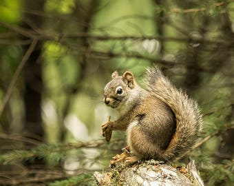 """Wildlife Photography - """"Who You Calling Squirrelly?"""" - fish photograph, nature, animal,orange, green unframed print"""