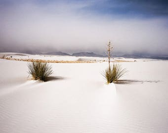 White Sands Morning, Large Print