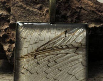 PhbeaD- Large Square Pendant with REAL DOBSONFLY WINGS: entomology jewelry, real insect jewelry, real wing jewelry, real butterfly wings
