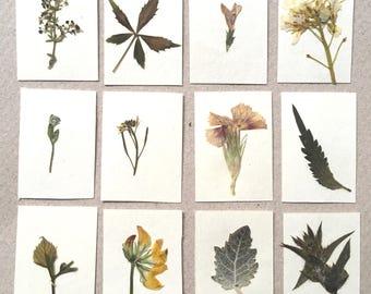 Dollhouse miniature herbarium, real pressed plant album. Set #2 of 12 plants.
