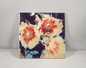 Ceramic Tile, Flower Blossoms Design, Home Décor, Photograph, Wall tile, trivet, coaster