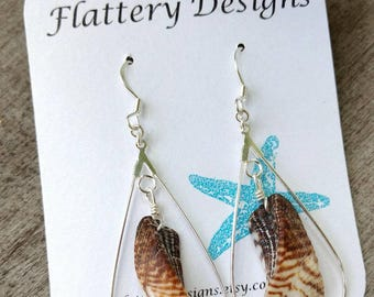 Hawaiian Mollusk Shell Earrings