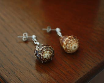 Small Cone Shell Earrings