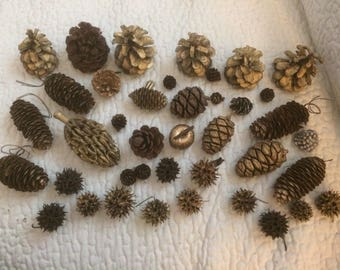 Lot Of 26 Different Size Pine Cones & 12 Texas Sweet Gum Balls