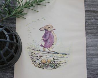 Benjamin Bunny Book Illustration