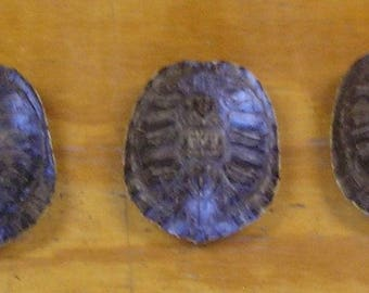"3 - 4"" Red Ear Slider Turtle Shells"