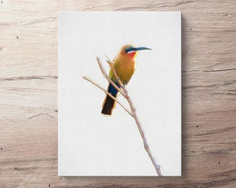 White Fronted Bee Eater - Bird Oil Painting Giclee Gallery Mounted Canvas Wall Art Print