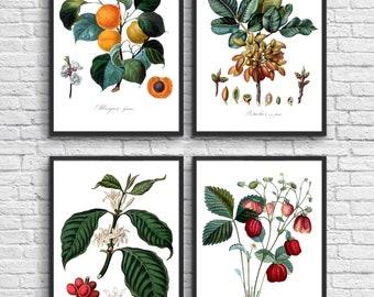 Set of 4 botanical prints, Antique illustration digital download, Botanical Vintage Art Prints, Book Plate Illustration, Vintage poster. #15
