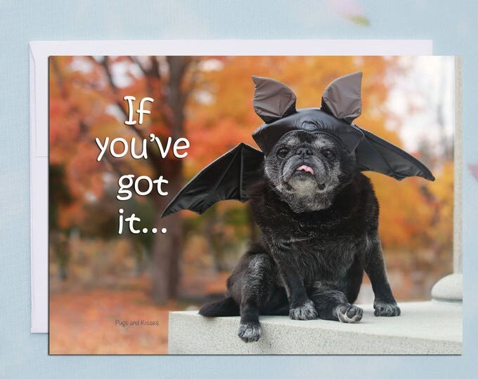 Box of 10 Halloween Cards Funny - Haunt It - 5x7