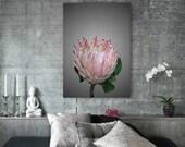 Protea Ice-cream  -  Flower Photography Print, Botanical Print , Modern Wall Art , Fine Art Photo, Flower Portrait Beauty,Nature Decor Gift