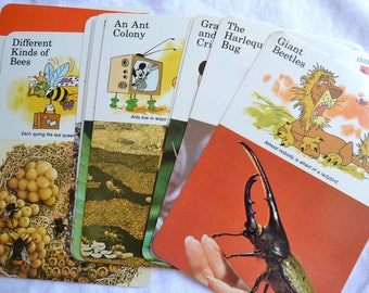 Vintage Disney Science Learning Educational Cards - Insects - 24