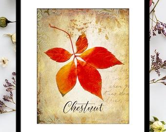 CHESTNUT FALL LEAF Printable: Autumn Print, Fall Leaves, Vintage Collage, Fall Decor, Autumn Decor, Leaf Print