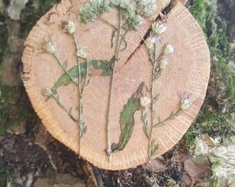 Wildflower Oak Decoration