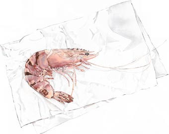 Tiger Prawn A4 Giclee Print of Original Blotted Line & Watercolour Painting. Food Illustration. Kitchen Art. Foodie Gift. Beach House Decor