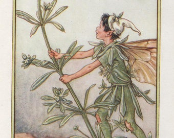 Flower Fairies: The GOOSE GRASS FAIRY Vintage Print c1930 by Cicely Mary Barker