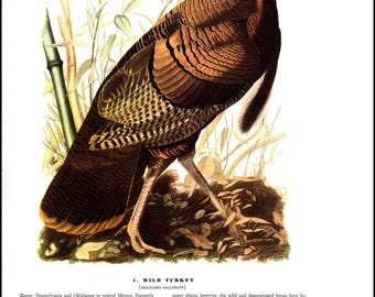 Wild Turkey and Yellow-billed Cuckoo JJ Audubon bookplate. The page is approx. 8.5 inches wide and 12 inches tall.