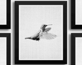Hummingbird Print, Printable Nursery Art, Hummingbird Wall Art, Printable Kid Artwork, Colibri Print, Bird Wall Prints, Nursery Art Prints