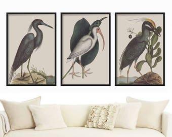 Wall Art Prints - Prints - Home Decor - Vintage Bird Print Set of 3 - Print Set of 3 Birds - Birds Print Set - Vintage Bird Illustration