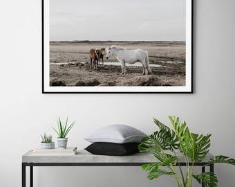 Icelandic Horses by Mitchell Hollander Art Print