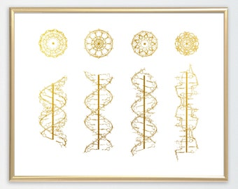 DNA helix conformation Print A-form B-form C-form and Z-form DNA Genetic Art Families of DNA helices Biology Art Dna structures,gold foil