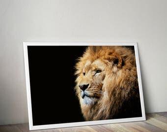 Lion print, animal print, safari animal prints, wilerness print, lion wall art, lion poster, lion photo, black and white, animal wall art,