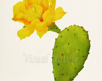 Prickly Pear Cactus Art Print, Botanical Art Print, Cactus Wall Art, Cactus Botanical Print, Cactus Art, green yellow art print