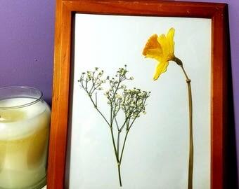 Framed Daffodil Pressed Flower