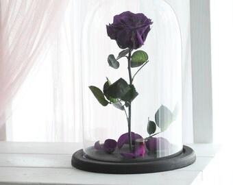 Beauty and the beast rose (Large), Belle Rose, forever purple rose, Enchanted Rose, rose in glass, preserved rose, five  year rose