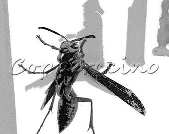 DIGITAL DOWNLOAD Black and White Wasp Photo Manipulation printable