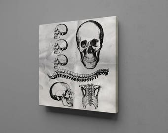 Skull Bones Anatomy Physiology Structure Fractures Skeleton Canvas Wall Art Print Decor Home Picture Abstract Home, Office or Dorm