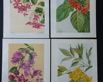 7 Vintage Botanical Indian Flowers Pages Ephemera Scraps 1950's Scrapbooking, Collage, Paper Crafts, Junk Journalling