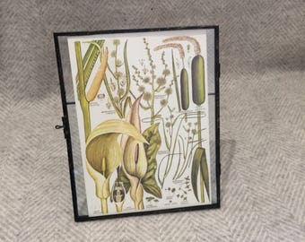 Vintage framed botanical drawing, vintage botanical flower illustrations, botanical prints, floral, in glass frame, Green leaves lillies