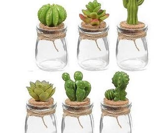 Favour cactus small jars
