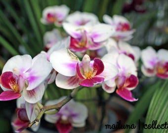 Flower Print - 5x7 Photograph in 8x10 Mat