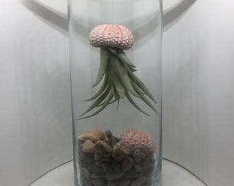 Jellyfish Terranium